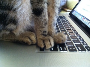 What is it with cats and computer keyboards?